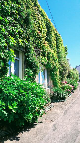 Rue arboré2